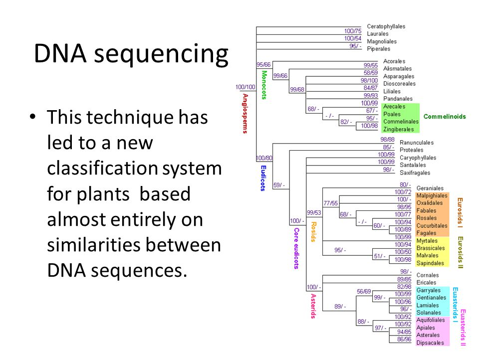 This technique has led to a new classification system for plants based almost entirely on similarities between DNA sequences.
