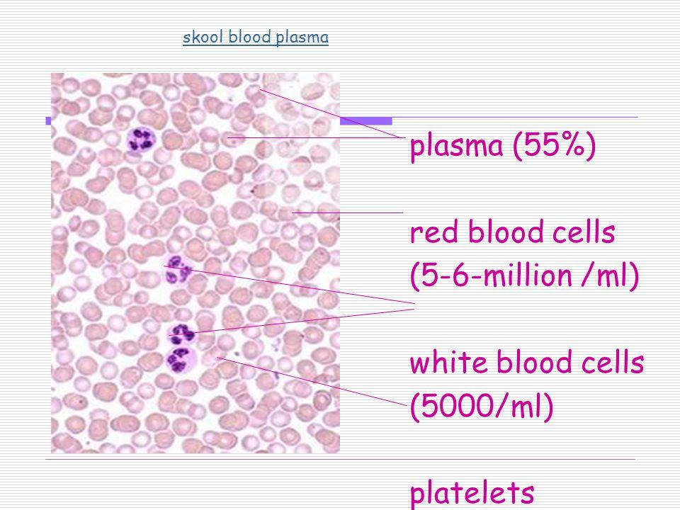 plasma (55%) red blood cells (5-6-million /ml) white blood cells (5000/ml) platelets skool blood plasma
