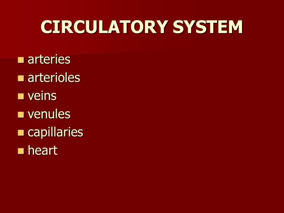 CIRCULATORY SYSTEM arteries arteries arterioles arterioles veins veins venules venules capillaries capillaries heart heart