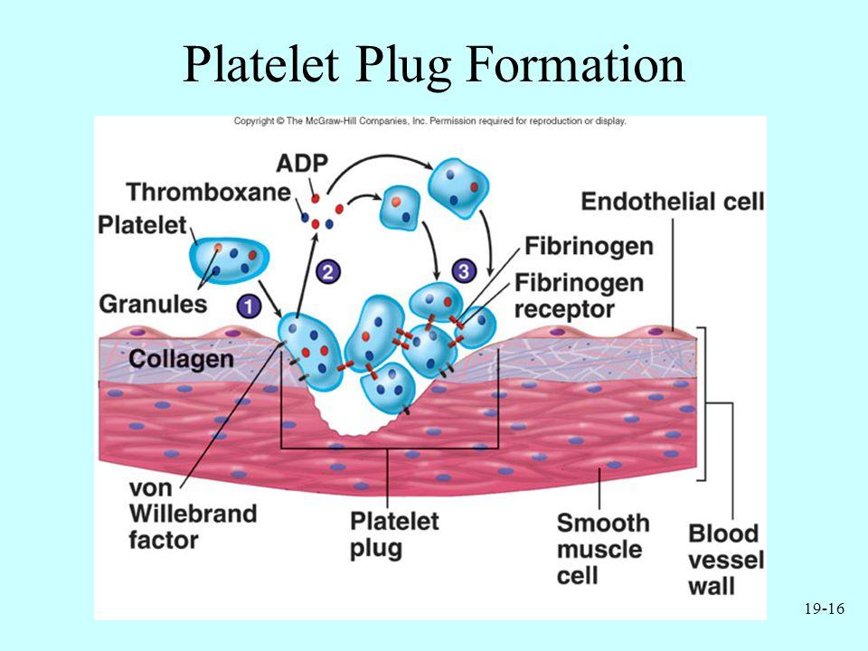 19-16 Platelet Plug Formation