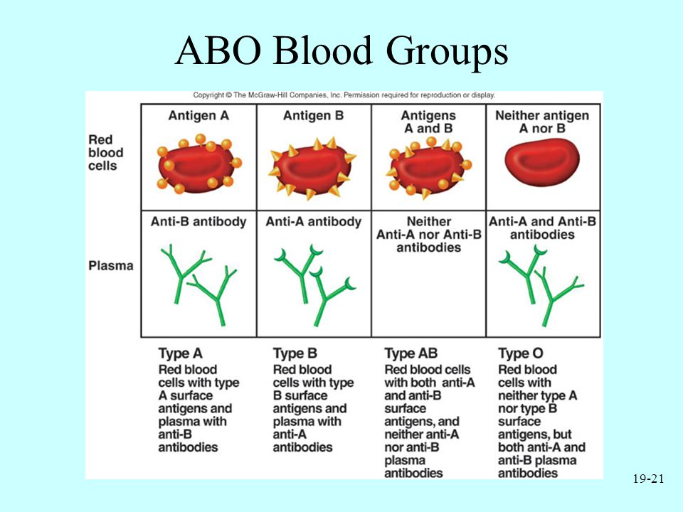 19-21 ABO Blood Groups