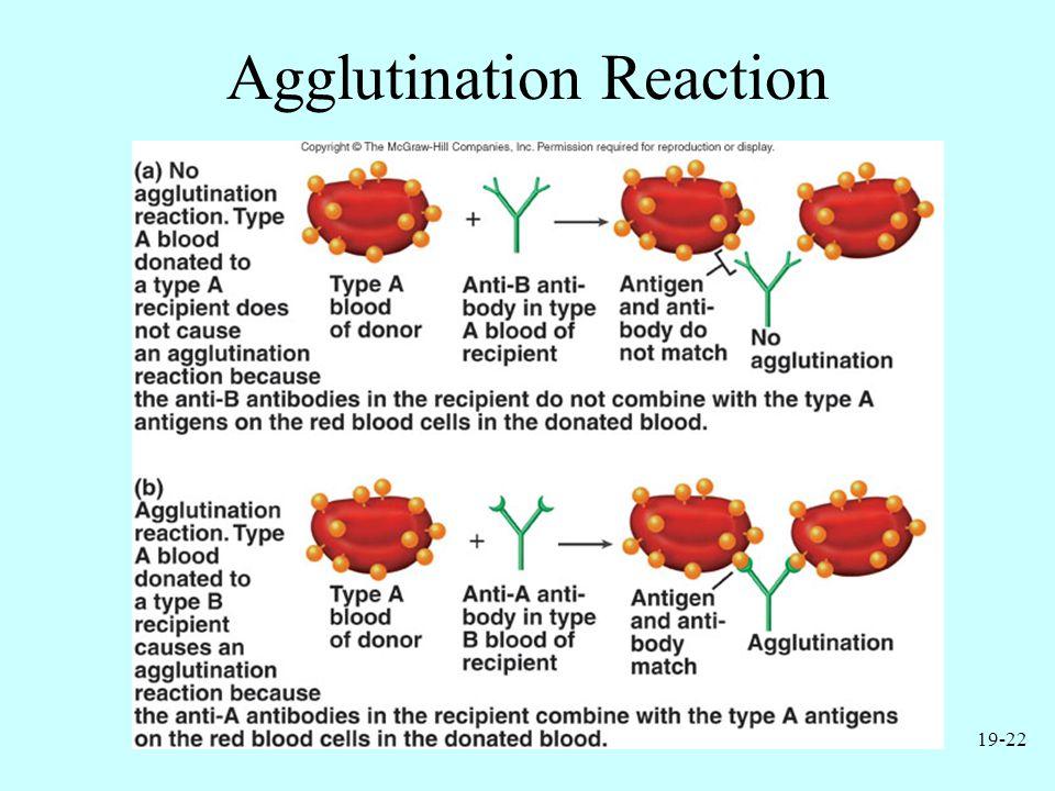 19-22 Agglutination Reaction
