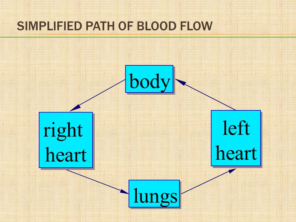 ANSWER b.Ventricles contract Rationale: During ventricular systole, the ventricles contract.