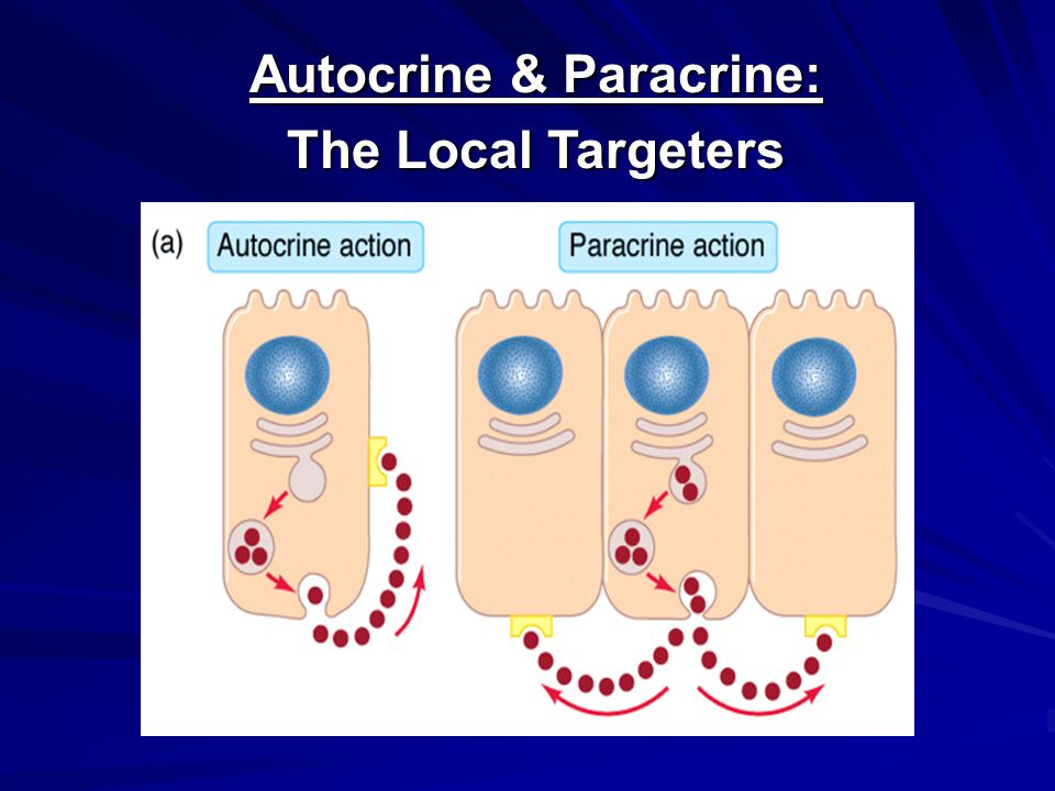 Autocrine & Paracrine: The Local Targeters
