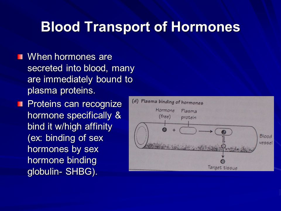 Blood Transport of Hormones When hormones are secreted into blood, many are immediately bound to plasma proteins. Proteins can recognize hormone speci
