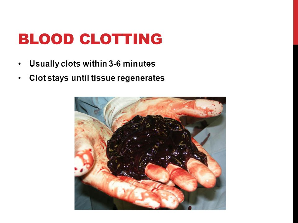 BLOOD CLOTTING Usually clots within 3-6 minutes Clot stays until tissue regenerates