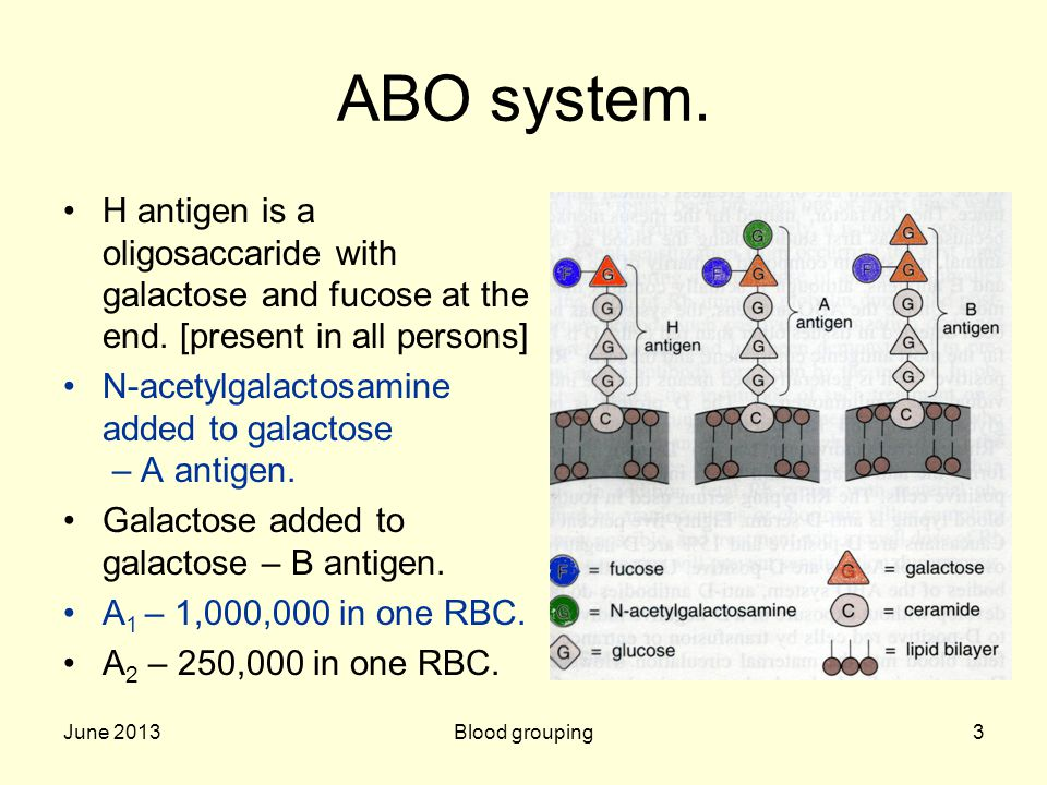 June 2013Blood grouping3 ABO system. H antigen is a oligosaccaride with galactose and fucose at the end. [present in all persons] N-acetylgalactosamin