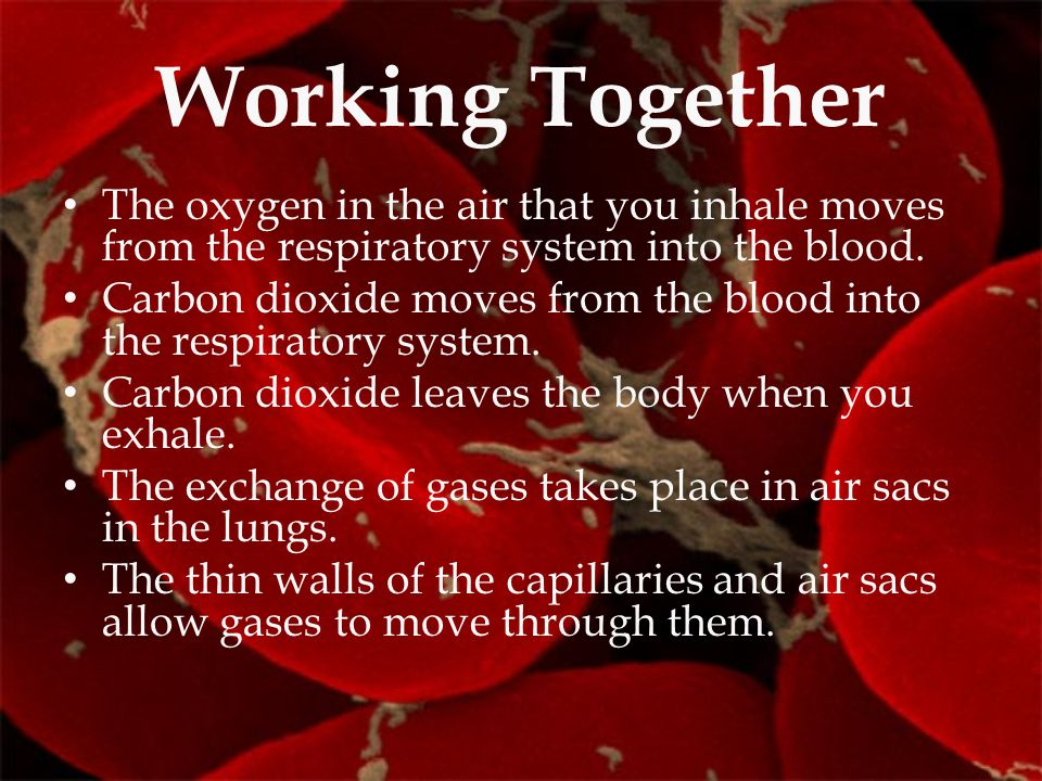Working Together The oxygen in the air that you inhale moves from the respiratory system into the blood. Carbon dioxide moves from the blood into the