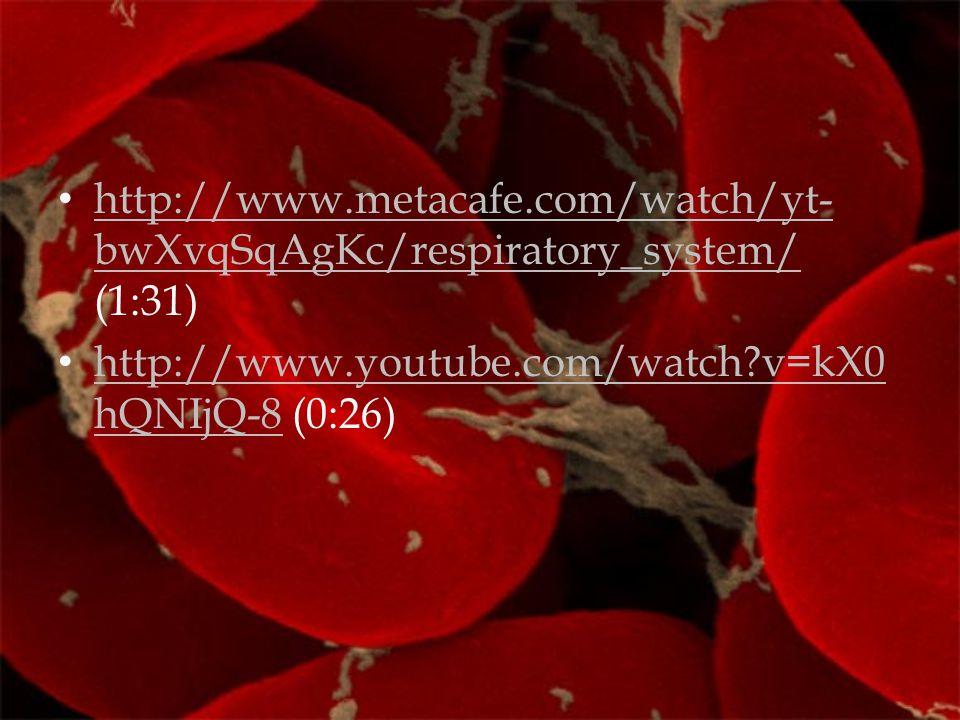 http://www.metacafe.com/watch/yt- bwXvqSqAgKc/respiratory_system/ (1:31) http://www.metacafe.com/watch/yt- bwXvqSqAgKc/respiratory_system/ http://www.