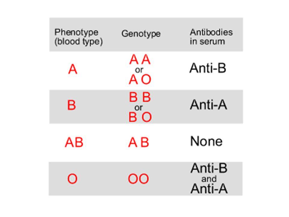 ABO Blood Type ABO Blood Typing
