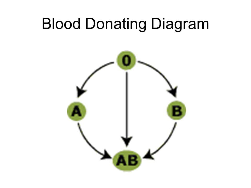 Rh + or - ?.Anti-Rh antibodies HINT: which blood has the Rh antigens on it.