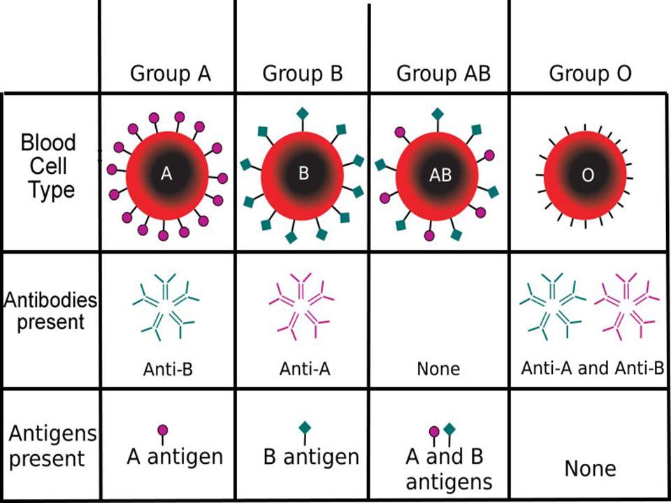 Bloodtype antigens and antibodies