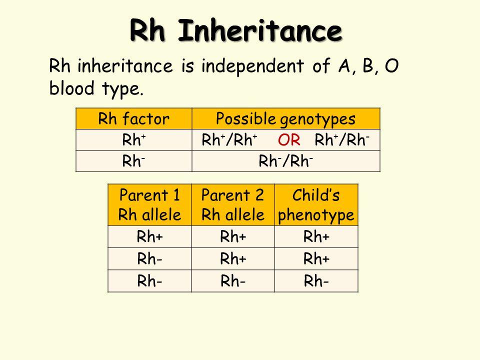 Rh Inheritance Parent 1 Rh allele Parent 2 Rh allele Child's phenotype Rh+ Rh-Rh+ Rh- Rh factorPossible genotypes Rh + Rh + /Rh + OR Rh + /Rh - Rh - Rh - /Rh - Rh inheritance is independent of A, B, O blood type.
