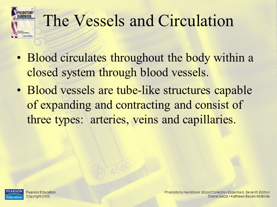 Phlebotomy Handbook: Blood Collection Essentials, Seventh Edition Diana Garza Kathleen Becan-McBride Pearson Education Copyright 2005 The Vessels and