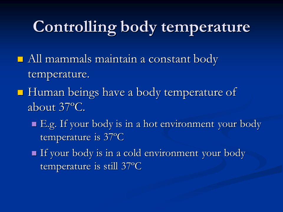 Controlling body temperature All mammals maintain a constant body temperature.