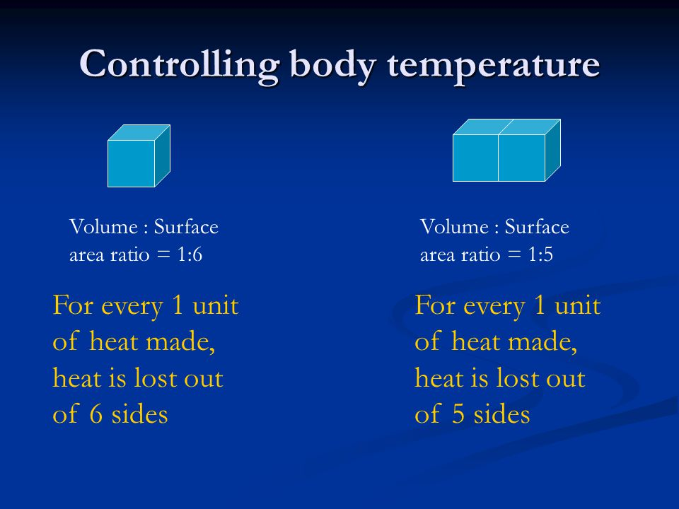 Controlling body temperature Animals with a large surface area compared to their volume will lose heat faster than animals with a small surface area.