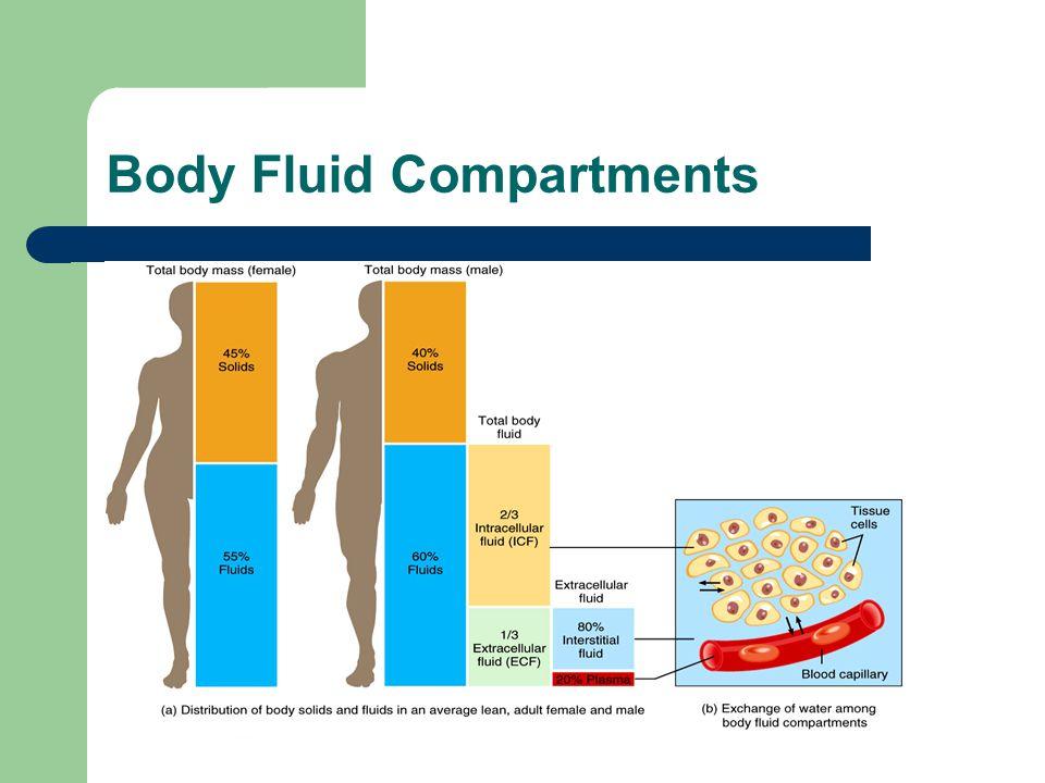 Sweat Electrolyte in sweat varies – Na+12.6-127 meq/l – K+5-32 meq/l – Cl-8.5-85 meq/l