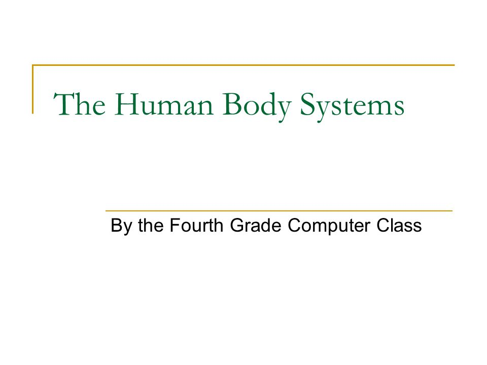 The human body is like a complex organization that has an important job to get done.