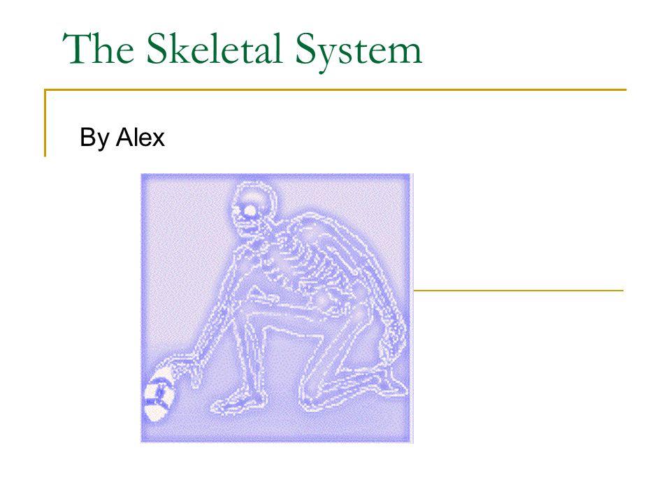 The Skeletal System By Alex