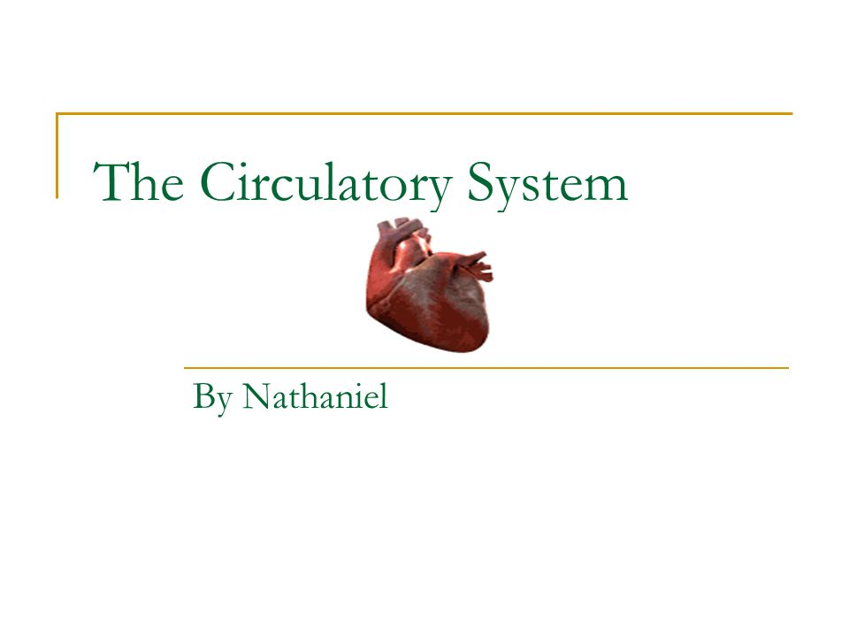 The Circulatory System By Nathaniel