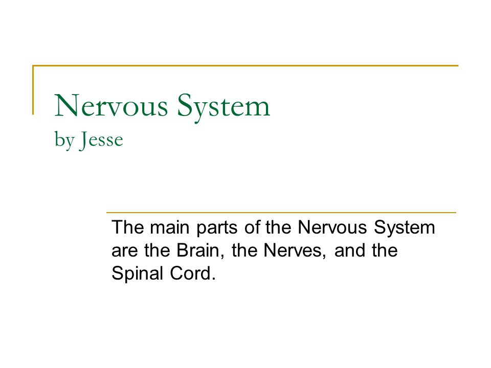 Nervous System by Jesse The main parts of the Nervous System are the Brain, the Nerves, and the Spinal Cord.