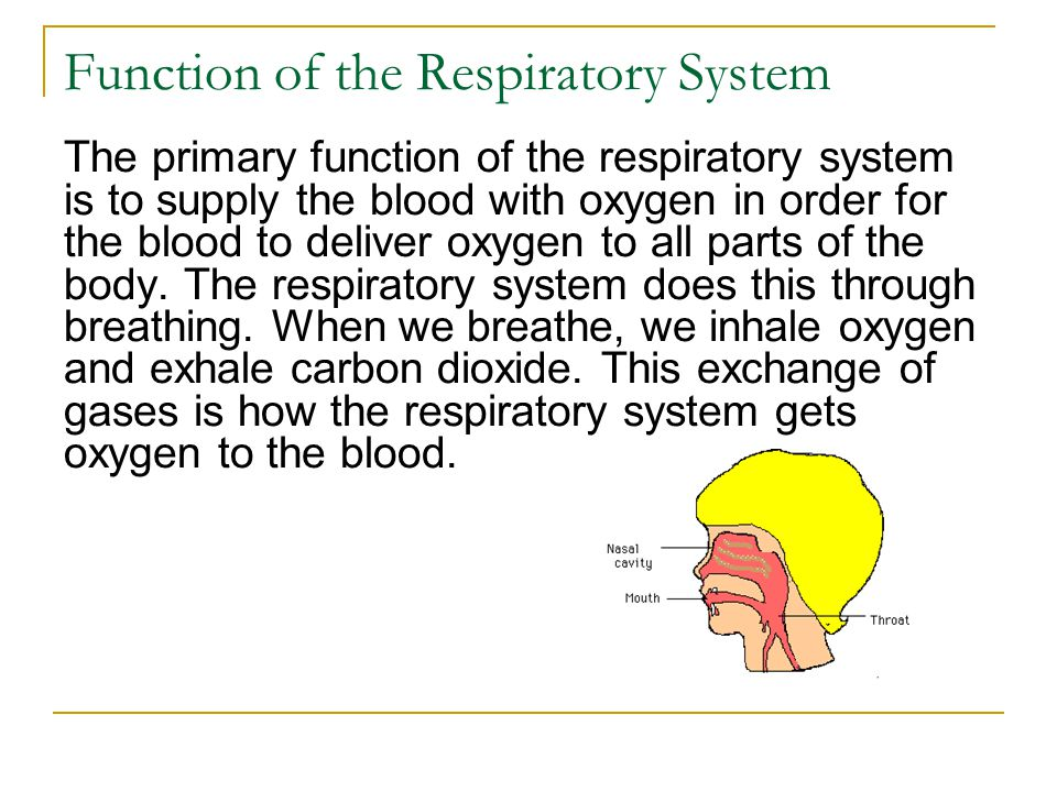 Function of the Respiratory System The primary function of the respiratory system is to supply the blood with oxygen in order for the blood to deliver