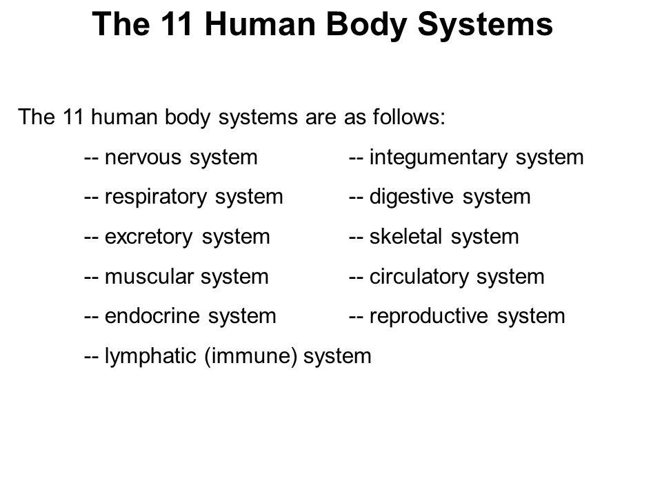 The 11 Human Body Systems The 11 human body systems are as follows: -- nervous system-- integumentary system -- respiratory system-- digestive system -- excretory system-- skeletal system -- muscular system-- circulatory system -- endocrine system-- reproductive system -- lymphatic (immune) system