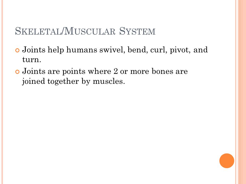 S KELETAL /M USCULAR S YSTEM Joints help humans swivel, bend, curl, pivot, and turn.