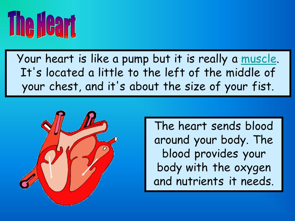 The right side of your heart receives blood from the body and pumps it to the lungs.