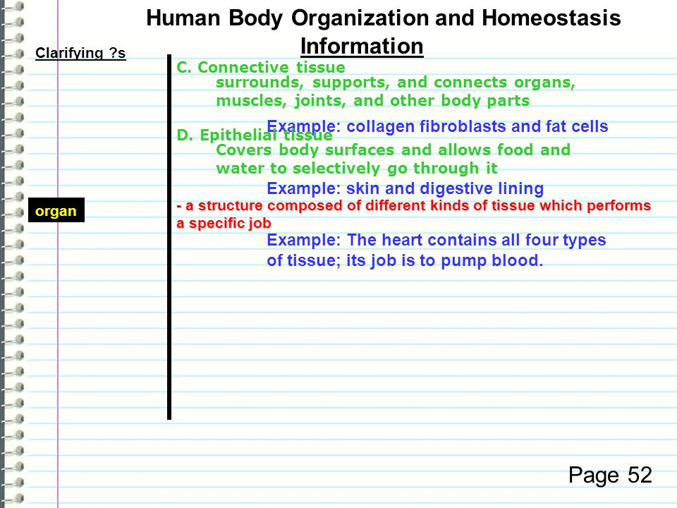 Clarifying ?s Information Page 52 Human Body Organization and Homeostasis C.