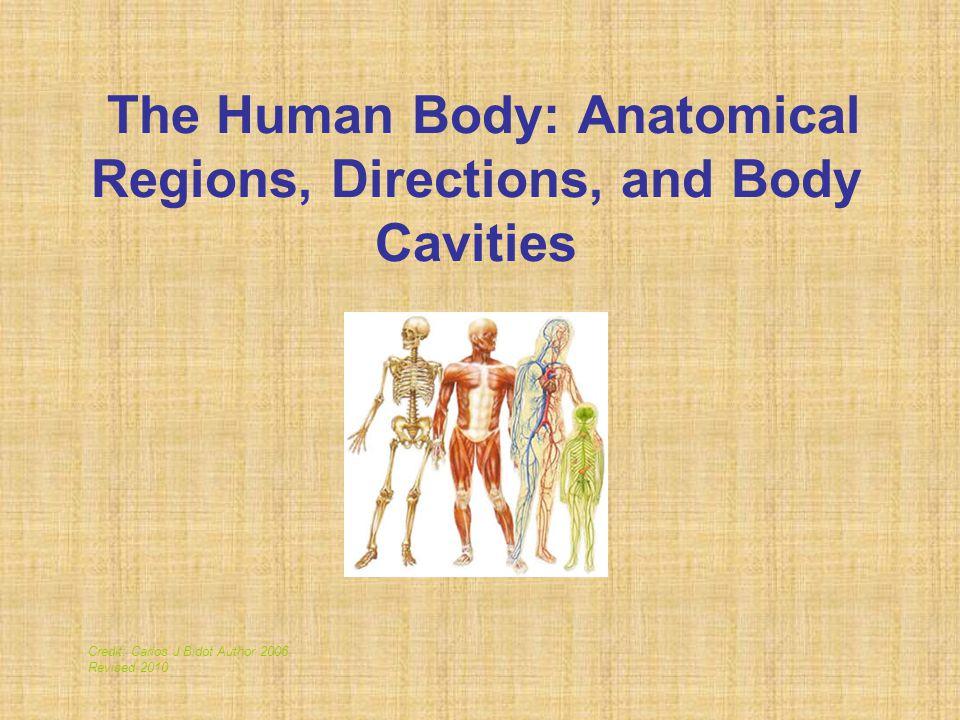 Body Cavities Figure 1.9a