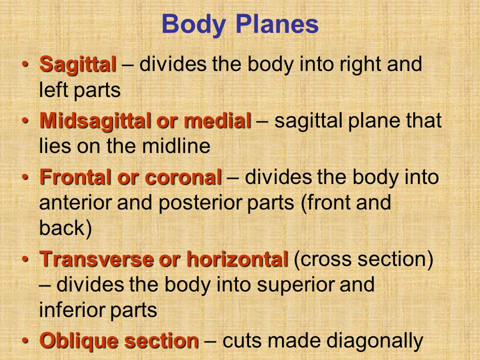 Other Body Cavities Oral and digestiveOral and digestive – mouth and cavities of the digestive organs NasalNasal –located within and posterior to the nose OrbitalOrbital – house the eyes Middle earMiddle ear – contain bones (ossicles) that transmit sound vibrations SynovialSynovial – joint cavities