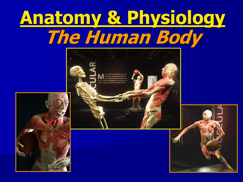 Body Organization What's the smallest unit of life.
