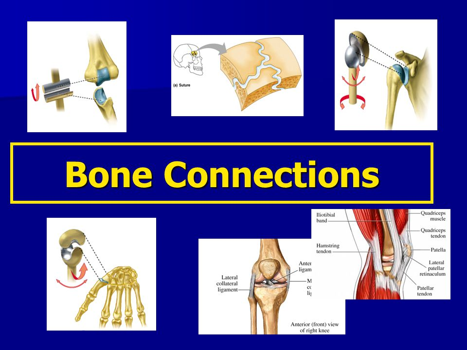 Bone Connections