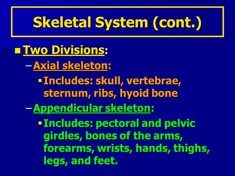 AxialSkeleton