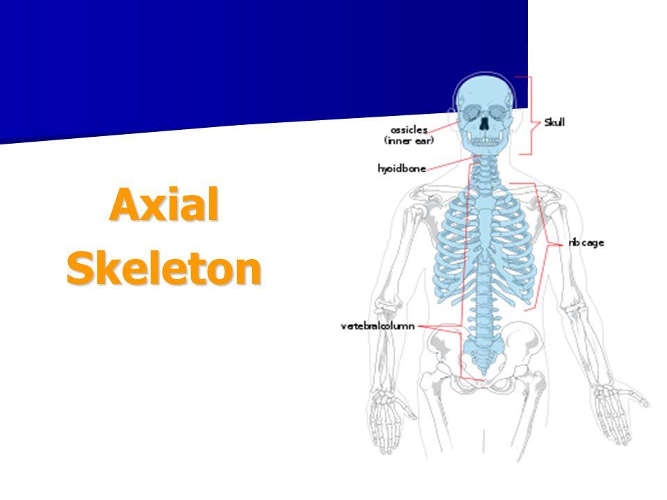 Function of Bones 1.Support – provides framework for the body 2.