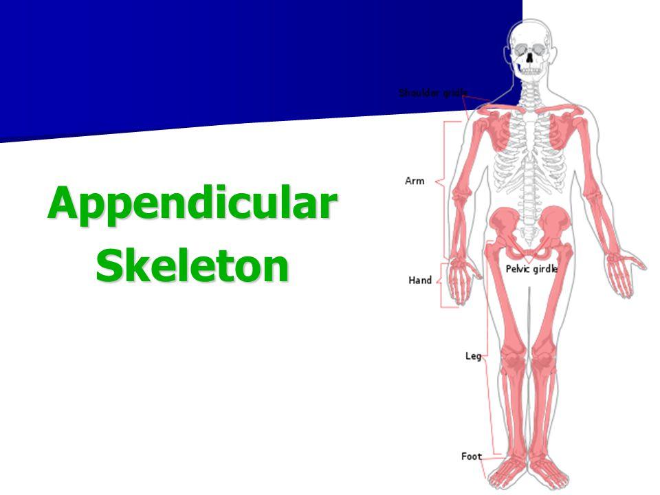 Curvature of the spine Curvature of the spine Scoliosis