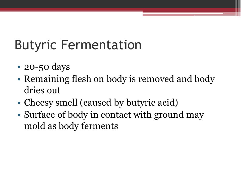 Butyric Fermentation 20-50 days Remaining flesh on body is removed and body dries out Cheesy smell (caused by butyric acid) Surface of body in contact