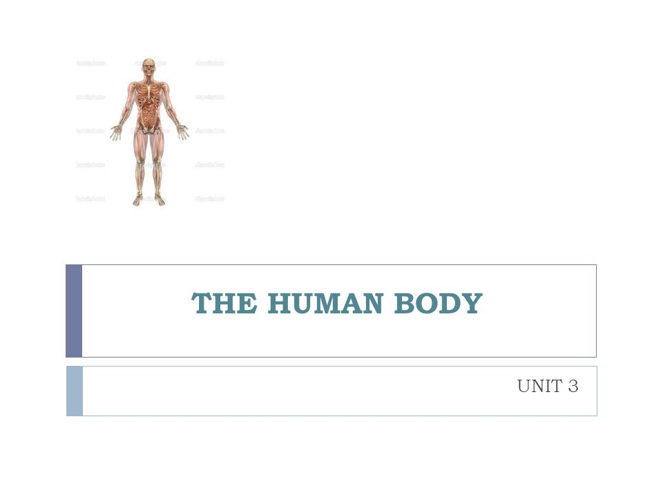 bones short Long Flat ribs muscles Voluntary biceps/triceps Involuntary joints Fixed Semi-flexible vertebrae Flexible elbow THE LOCOMOTOR SYSTEM They protect internal organs and support the body.