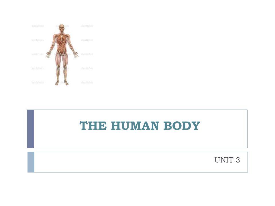 THE HUMAN BODY UNIT 3