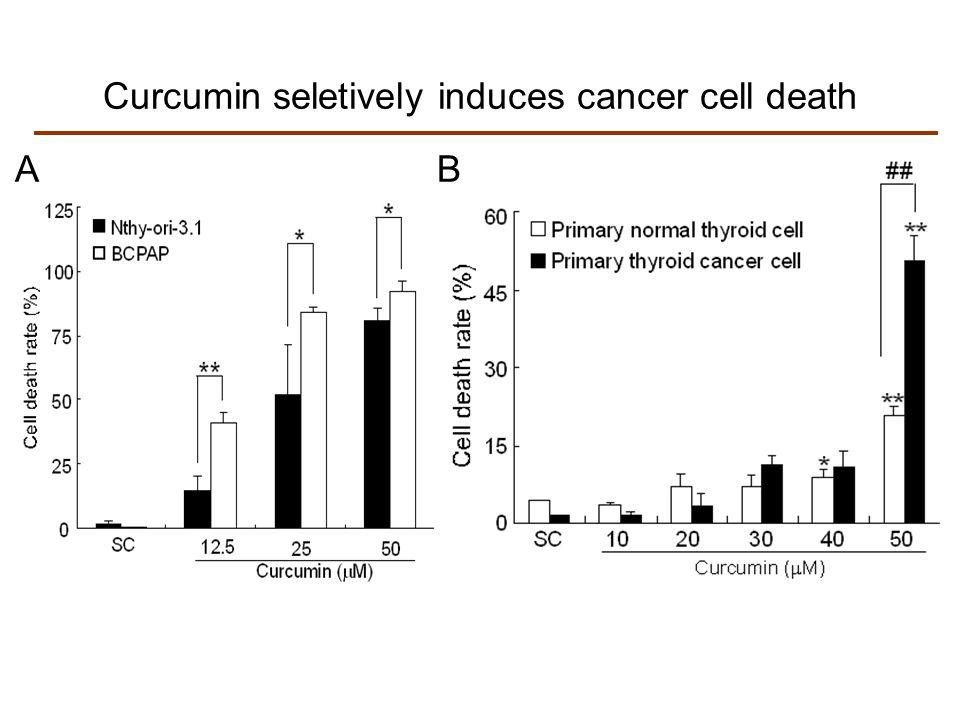 Curcumin seletively induces cancer cell death AB