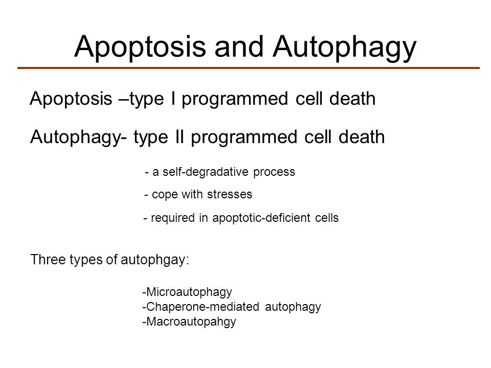 Apoptosis and Autophagy Apoptosis –type I programmed cell death Autophagy- type II programmed cell death - a self-degradative process - cope with stre