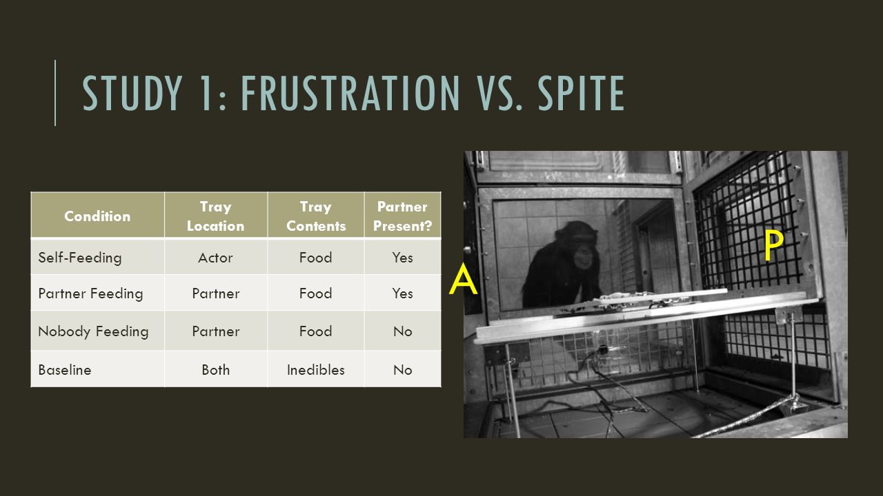 STUDY 1: FRUSTRATION VS. SPITE Condition Tray Location Tray Contents Partner Present? Self-FeedingActorFoodYes Partner FeedingPartnerFoodYes Nobody Fe