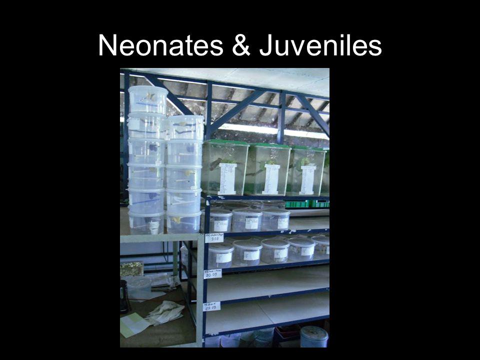 Neonates & Juveniles
