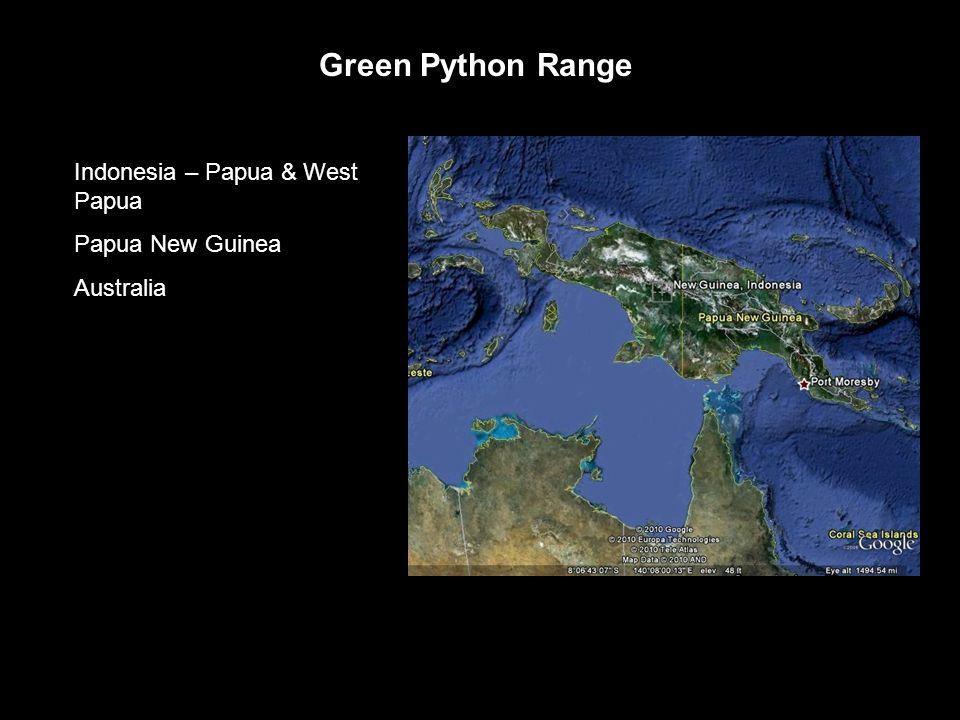 Green Python Range Indonesia – Papua & West Papua Papua New Guinea Australia