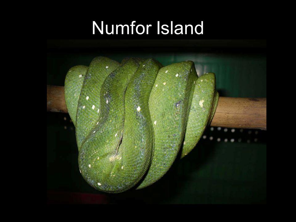 Numfor Island