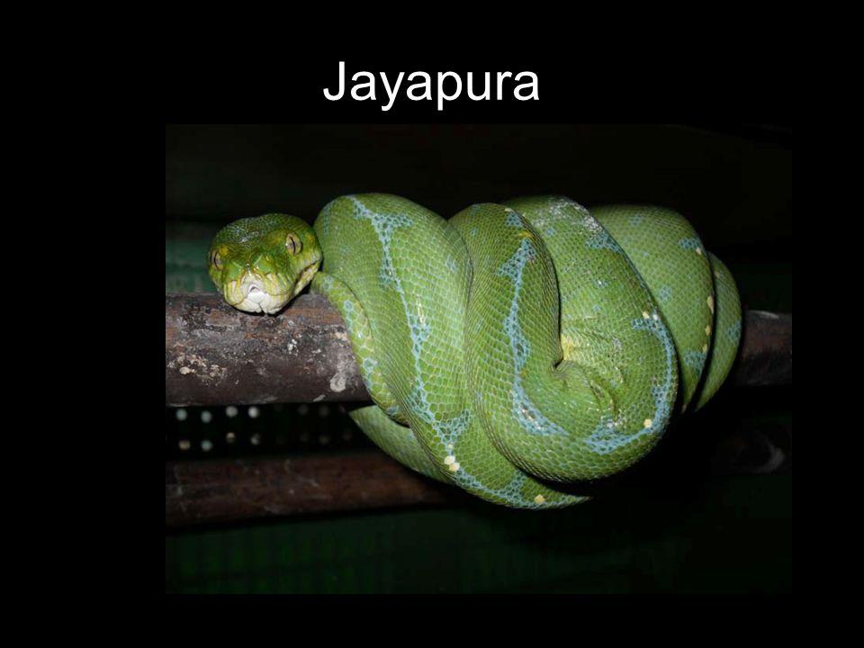 Jayapura