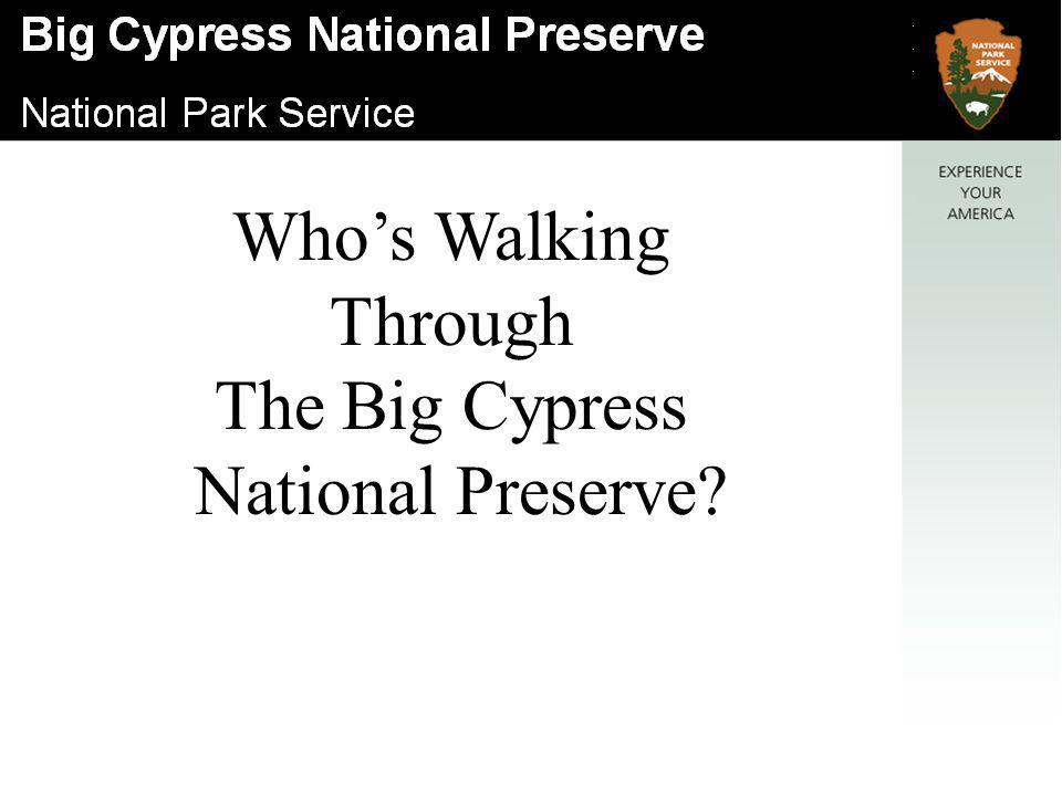Who's Walking Through The Big Cypress National Preserve