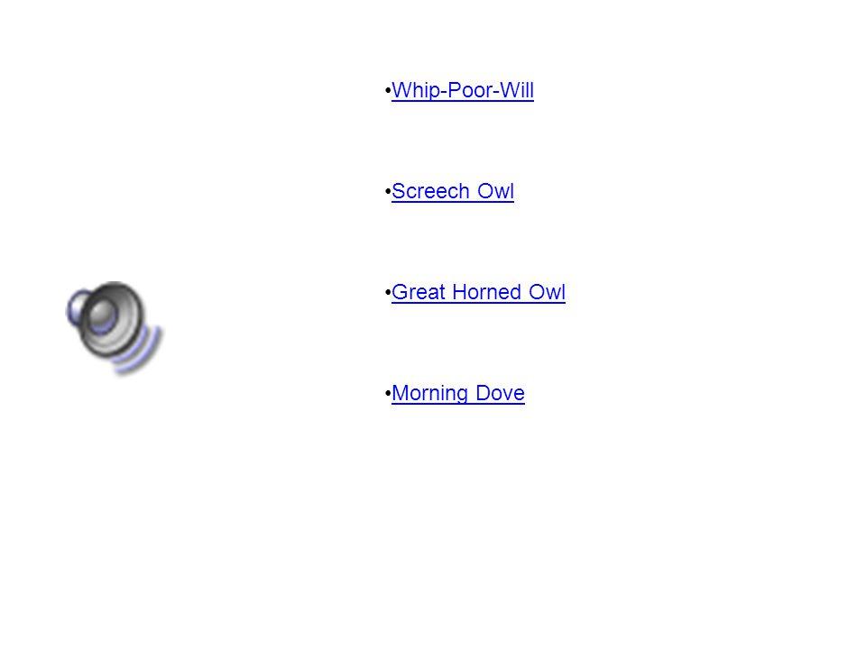 Whip-Poor-Will Screech Owl Great Horned Owl Morning Dove