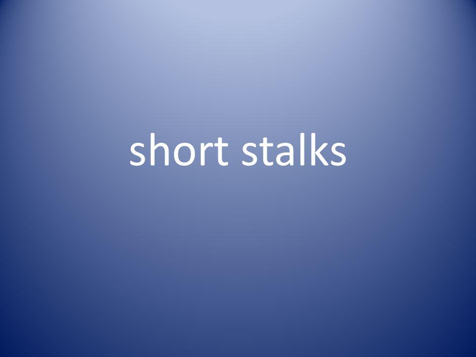 short stalks
